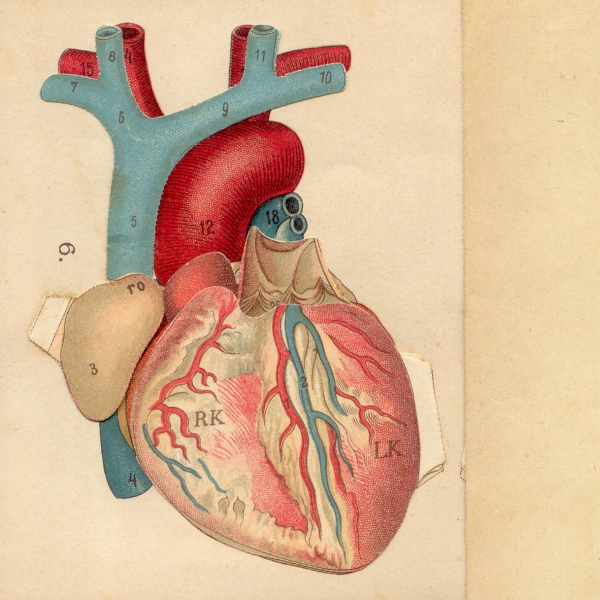 Physics of the Heart
