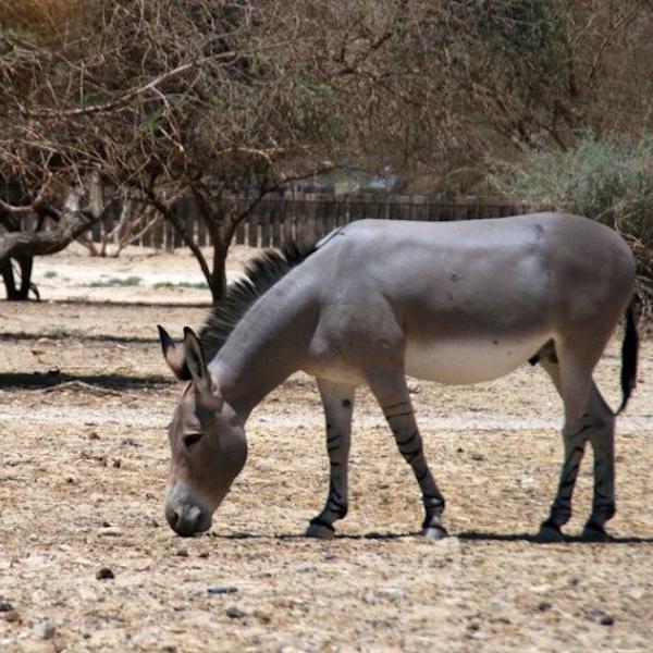 The Donkey Story